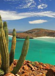 Cactus con playa de Mexico al fondo